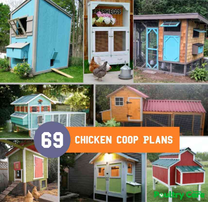 photo about Free Printable Chicken Coop Plans identify 69 Do it yourself Bird Coop Options and Recommendations That Are Simple in direction of Establish