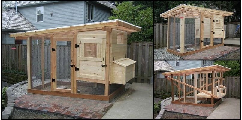 Tips For Building A Chicken Coop On A Budget