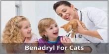Benadryl for cats
