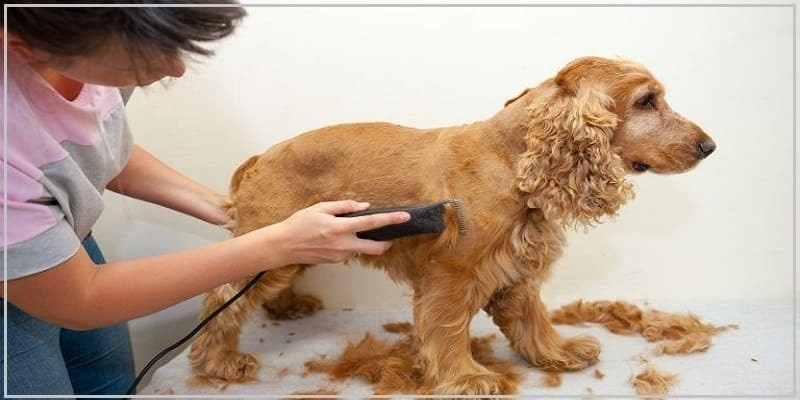 Use Dog Grooming Clippers