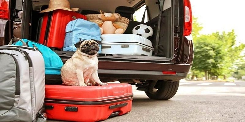 The 4 Best Ways To Transport Your Pets
