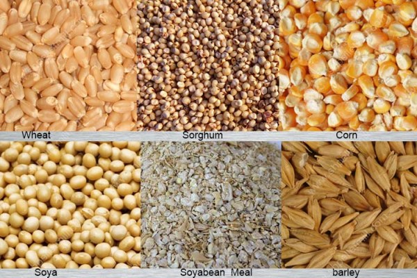 Poultry Feed Formulation Ingredients