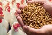 Poultry Feed Formulation: Milled Poultry Feed