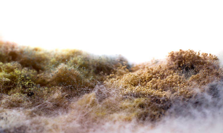 The growth of mold in poultry feed can pose serious health and productivity challenges