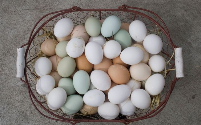 different poultry egg colors