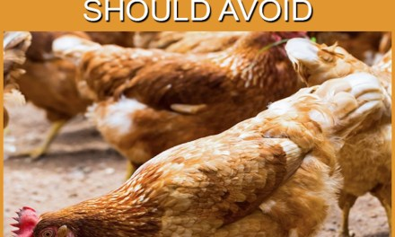 10 Wrong Foods Chickens Should Not Eat- (And Maybe You're Still Giving Them)
