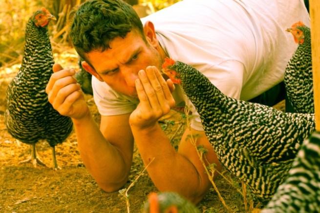 are chickens smart