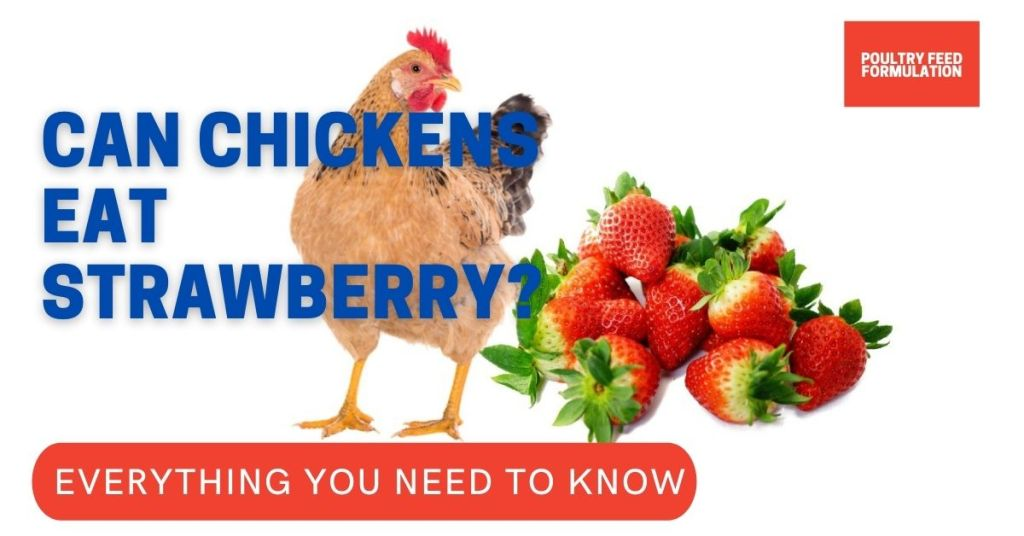 can chickens eat strawberry