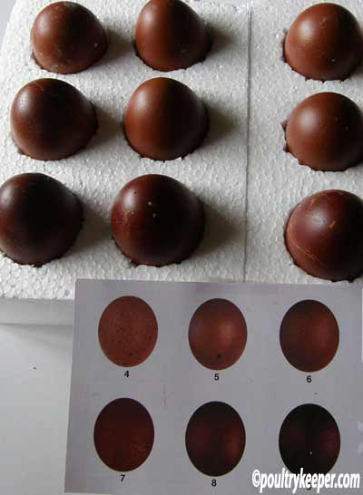 dark brown eggs on tray