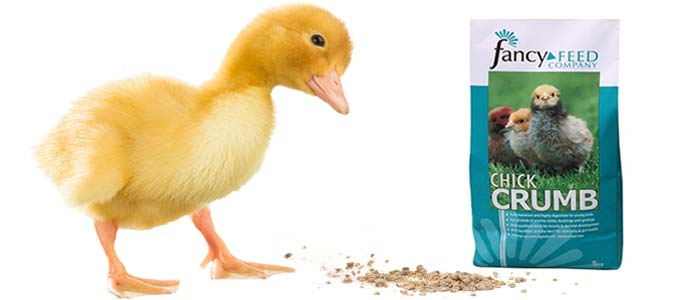 Can you feed Chick Crumbs to Ducklings