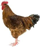 Rhodebar Chicken