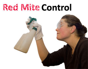 Spraying Red Mite