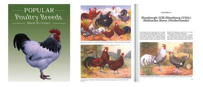 Popular Poultry Breeds Book Review