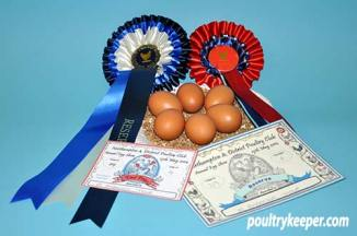 Six Brown Marans Eggs