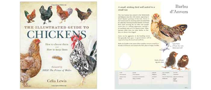 Illustrated Guide to Chickens Book Review