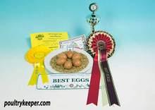 Marans Bantam Eggs