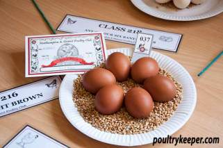 Six Bantam Eggs
