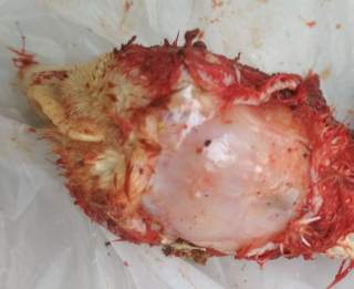 Intracebral pathogenicity index for Newcastle disease