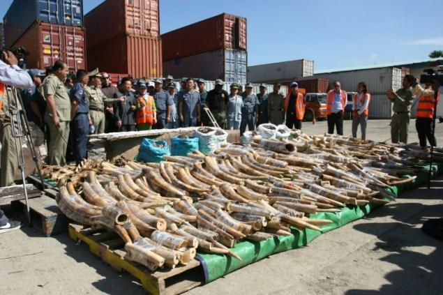 Une importante saisie d'ivoire et d'autres organes d'animaux sauvages a eu lieu au Cambodge. Devenu une voie de passage pour ce trafic juteux, le pays doit renforcer ses lois et la surveillance de ses frontières.