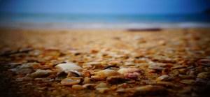 Areia praia com conchas