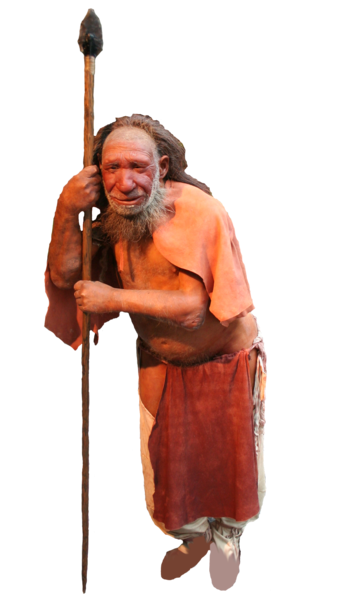 669px-Comparison_of_Neanderthal_and_Homo_sapiens_(version_1)