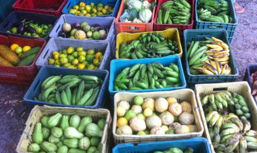 Estação Orgânica Ibirapitanga é inaugurada com feira agroecológica