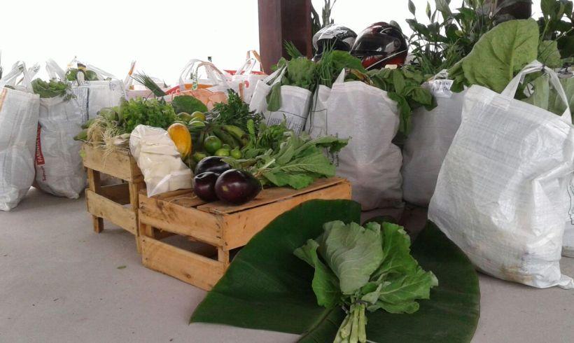 Cestas e produtos orgânicos da rede de agroecologia