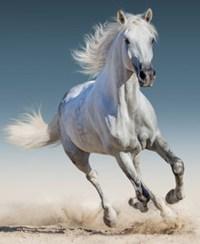 white-horse400-2