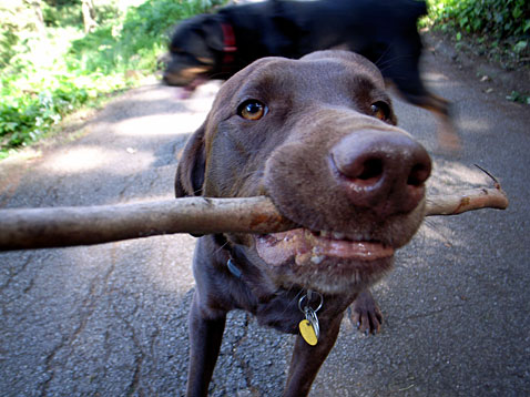 Jojo and Her Stick