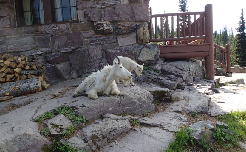 Terrible news about Sperry Chalet, Glacier NP