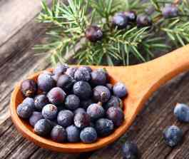 Blood Pressure 911 Reviews-Juniper Berry-ingredient