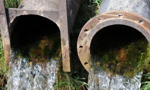 Waste Water Causing Algae Bloom In Tampa Bay