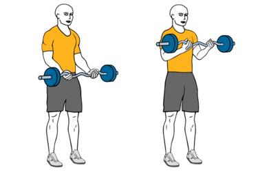 bíceps workout