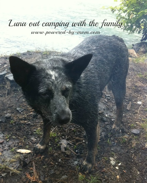 Luna camping