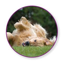 Seasonal Allergies For Dogs Itchypetseeyourvet Powered
