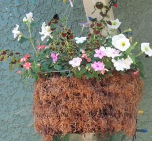 hanging basket after