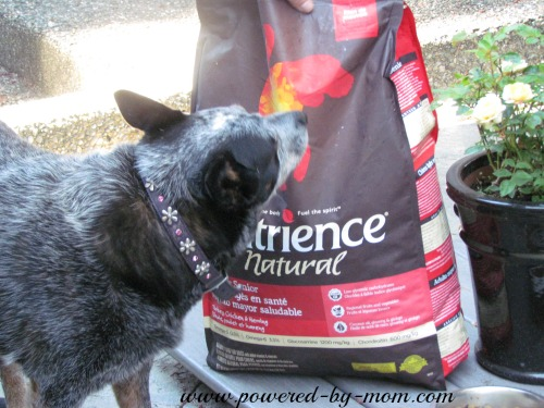 Luna and nutrience bag