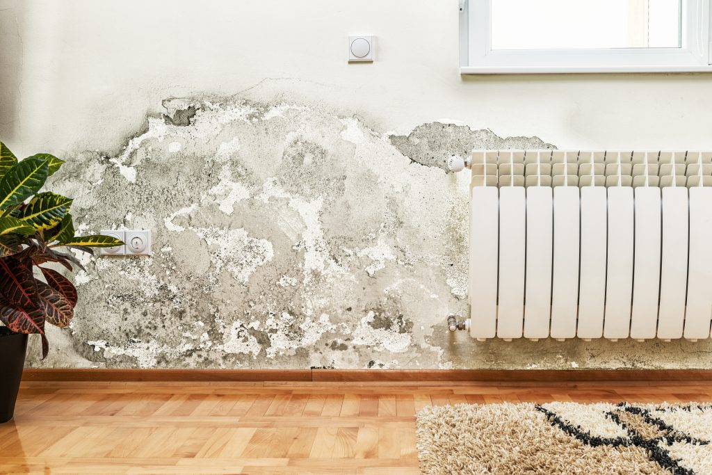 mold mildew or water stains