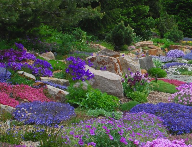 Merveilleux Alpine Perennial Garden