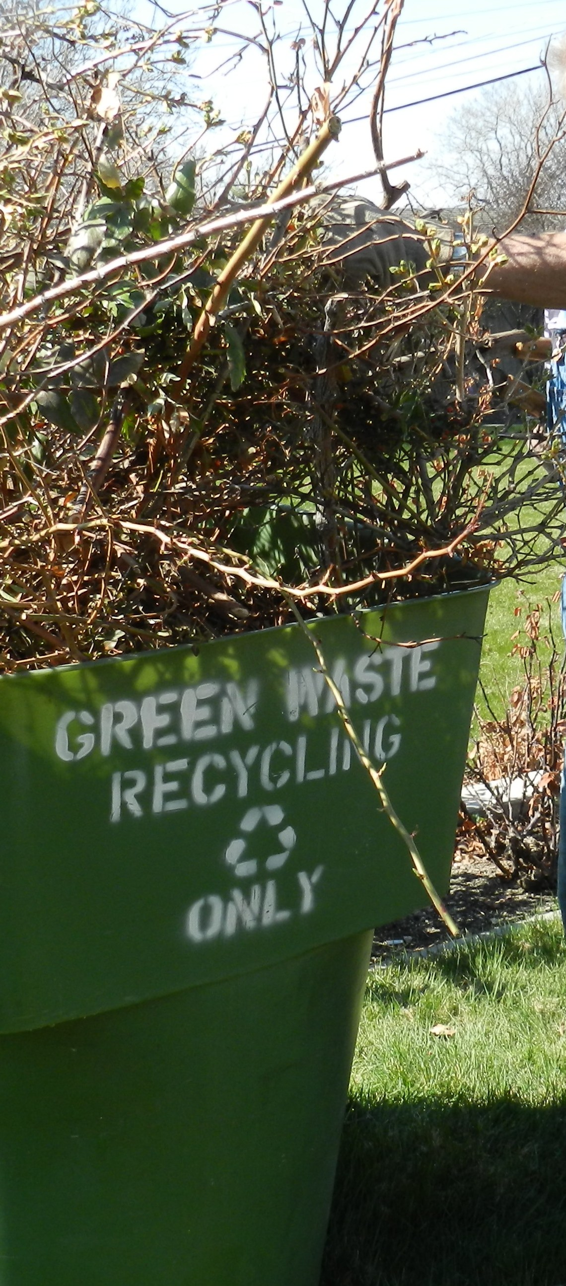 green waste container full of rosebush cuttings