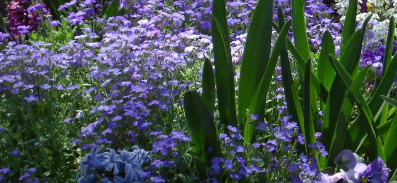 Cold Hardy Perennials Preventing Frost Damage Powerful Perennials