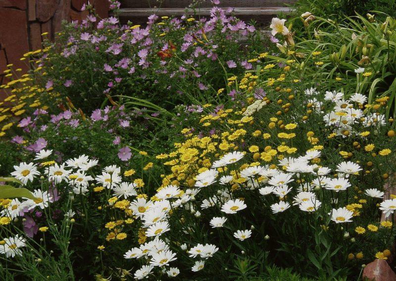 gardening alkaline soil
