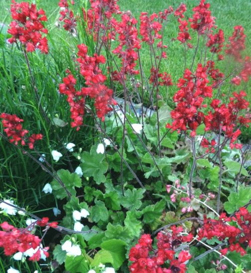 Long Blooming Perennials Color That Lasts All Season