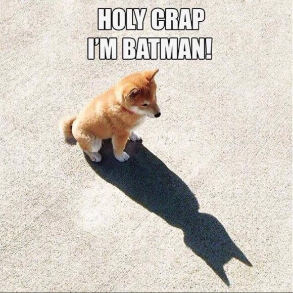 Batman Dog copy