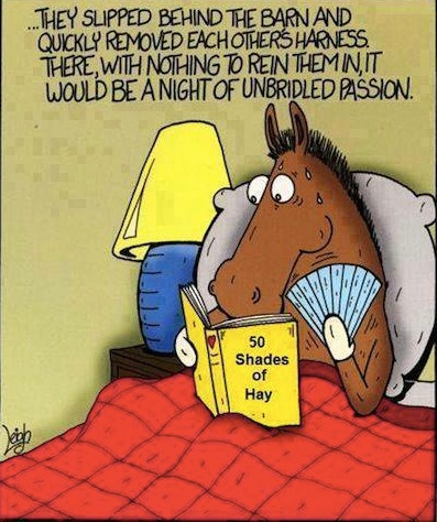 50 Shades of Hay copy