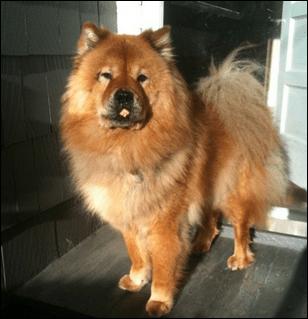 The PowerPivot Puppy