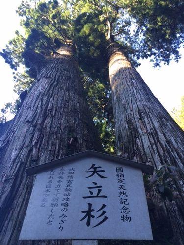 武田信玄の矢杉