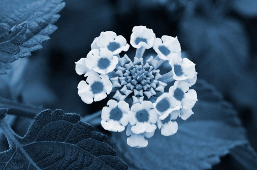 Cyanotype Photography [pt.23] (4)
