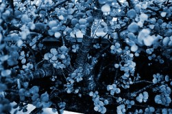 Cyanotype Photography [pt.30] (9)