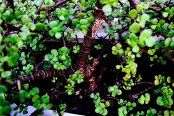Nature Photoshooting [pt.5] (5)